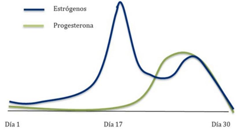 prevenir estrogeno ciclo de esteroides